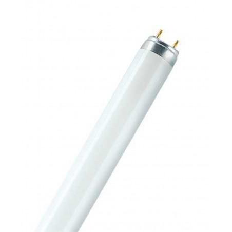 Osram - Ampoule L - 36 W - 865 - 120 cm